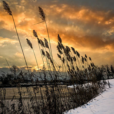 Winter Sunrise Through The Reeds - Square Poster