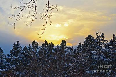 Winter Sunset On The Tree Farm #1 Poster