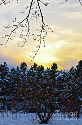 Winter Sunset On The Tree Farm #2 Poster