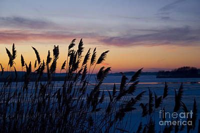Poster featuring the photograph Winter Sunset  by Paula Guttilla