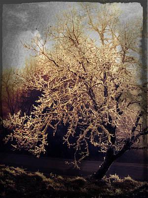Winter Tree Dark Poster by Cathie Tyler
