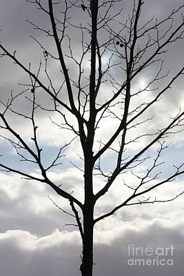 Winter Tree With Interesting Clouds Poster by Carol Groenen