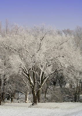 Poster featuring the photograph Winter Trees by Diane Merkle