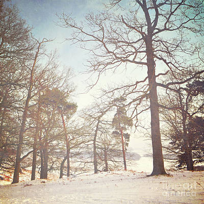 Poster featuring the photograph Winter Trees by Lyn Randle