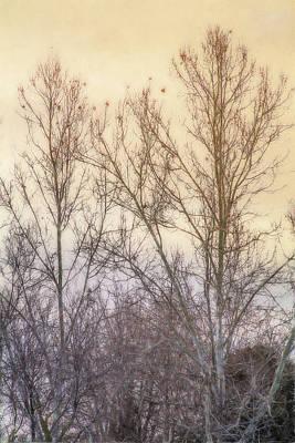 Winter Whisper In The Trees Poster