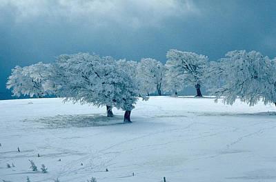 Winter Wonderland Poster by Flavia Westerwelle