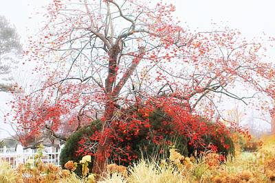 Winterberry Tree Poster by Marcia Lee Jones