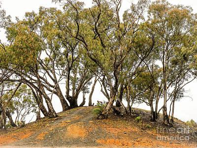 Wintery Australian Landscape Poster by Lexa Harpell