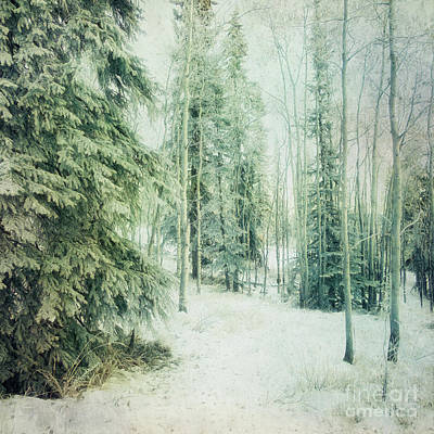 Wintry Woods Poster by Priska Wettstein