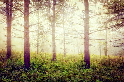 Wisconsin Foggy Forest Poster by Jennifer Rondinelli Reilly - Fine Art Photography