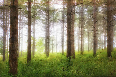 Wisconsin Forest Poster by Jennifer Rondinelli Reilly - Fine Art Photography