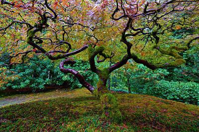 Wisdom Tree Poster by Jonathan Davison