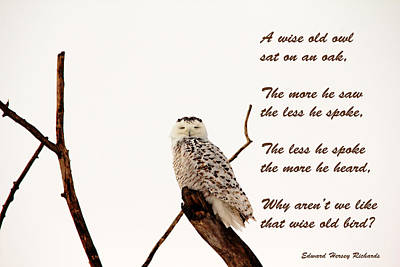 Wise Old Owl  Poster by Debbie Oppermann