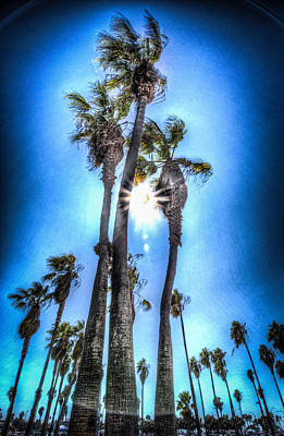 Poster featuring the photograph Wispy Palms by T Brian Jones