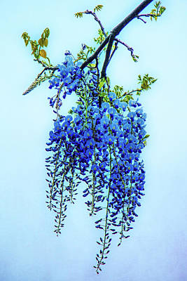 Poster featuring the photograph Wisteria by Chris Lord