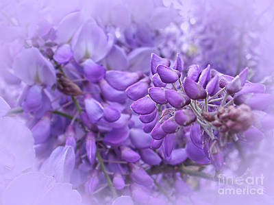 Wisteria In The Mist By Kaye Menner Poster by Kaye Menner