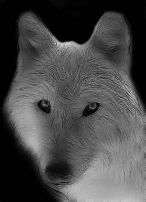 Wolf - Black And White Poster by Sandy Keeton