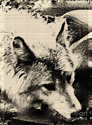 Poster featuring the digital art Wolf Lite by Debra     Vatalaro