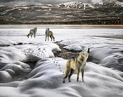 Wolf Pack Howling Poster
