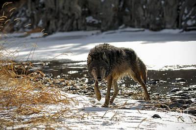 Wolf Winter Poster by Wildlife Fine Art