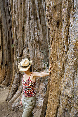 Woman Leaning On Giant Sequoia Tree Poster by Dawn Kish