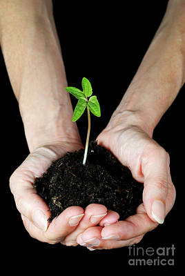Woman's Hands Holding Seedling Poster by Sami Sarkis