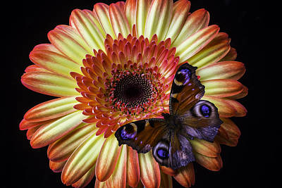 Wonderful Butterfly On Daisy Poster by Garry Gay