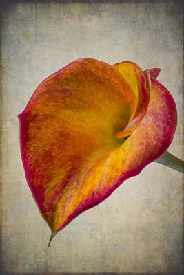 Wonderful Calla Lily Softly Poster