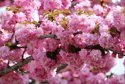 Wonderful Pink Blossoms Poster