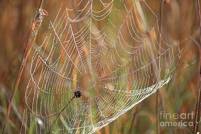 Wonders Of Nature - Dewdrop Web Poster