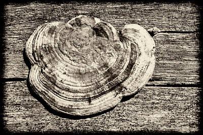 Poster featuring the photograph Wood Decay Fungi, Nagzira, 2011 by Hitendra SINKAR
