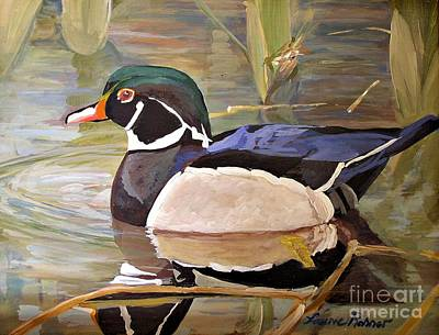 Wood Duck On Pond Poster by Laurie Rohner
