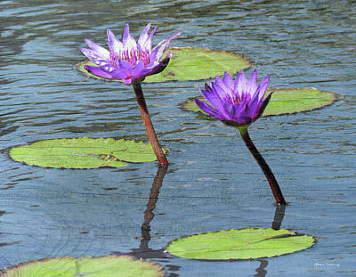 Wood Enhanced Water Lilies Poster