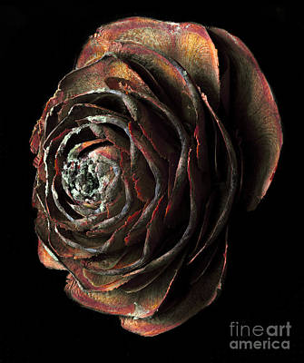 Wood Rose Poster by Russ Brown