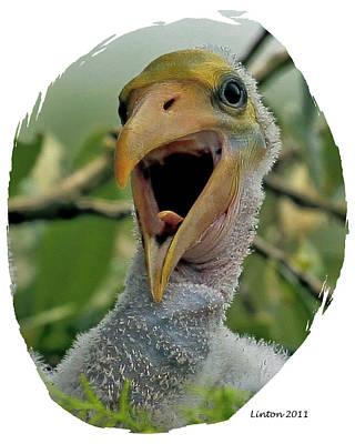 Wood Stork Nestling Poster by Larry Linton