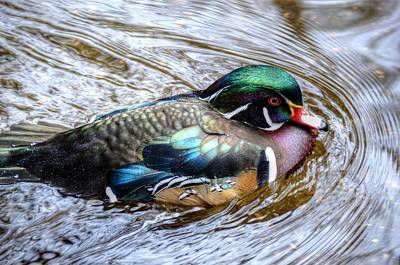 Woodduck Portrait Poster by Ronda Ryan