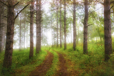 Wooded Trail  Poster by Jennifer Rondinelli Reilly - Fine Art Photography