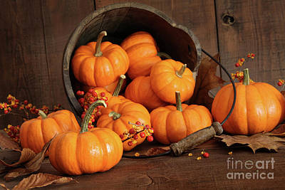 Wooden Bucket Filled With Tiny Pumpkins Poster