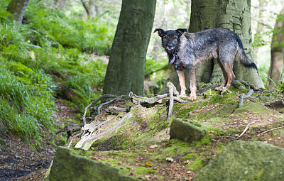 Woodland Dog Poster