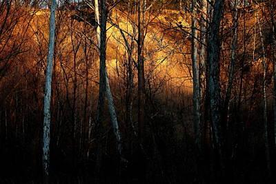Woodland Illuminated Poster by Bruce Patrick Smith