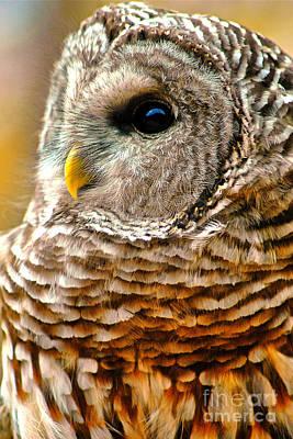 Woodland Owl Poster by Adam Olsen