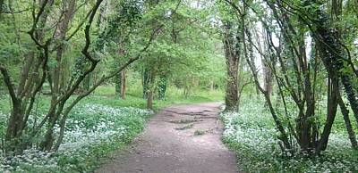 Woodland Path 1 Poster
