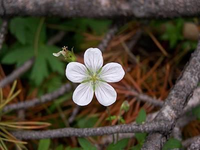 Woodland Wildflower Poster