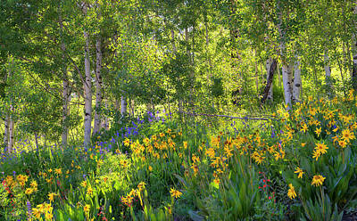 Poster featuring the photograph Woodland Wildflowers by Tim Reaves