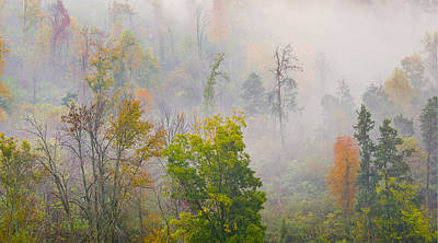 Poster featuring the photograph Woods From Afar by Wanda Krack