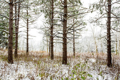 Woods In Winter 2 At Retzer Nature Center  Poster by Jennifer Rondinelli Reilly - Fine Art Photography