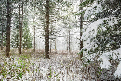 Woods In Winter At Retzer Nature Center  Poster by Jennifer Rondinelli Reilly - Fine Art Photography