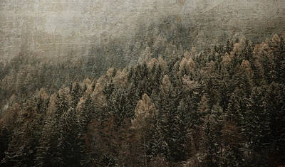 Woods In Winter Poster by Vittorio Chiampan