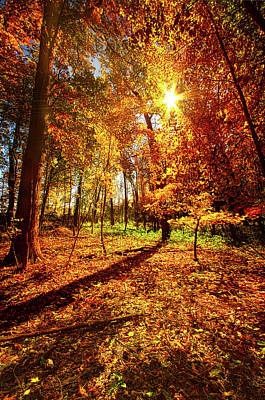 Woods Walking Poster by Phil Koch