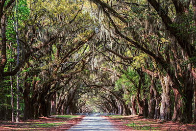Wormsloe Plantation Oaks Poster by Joan Carroll